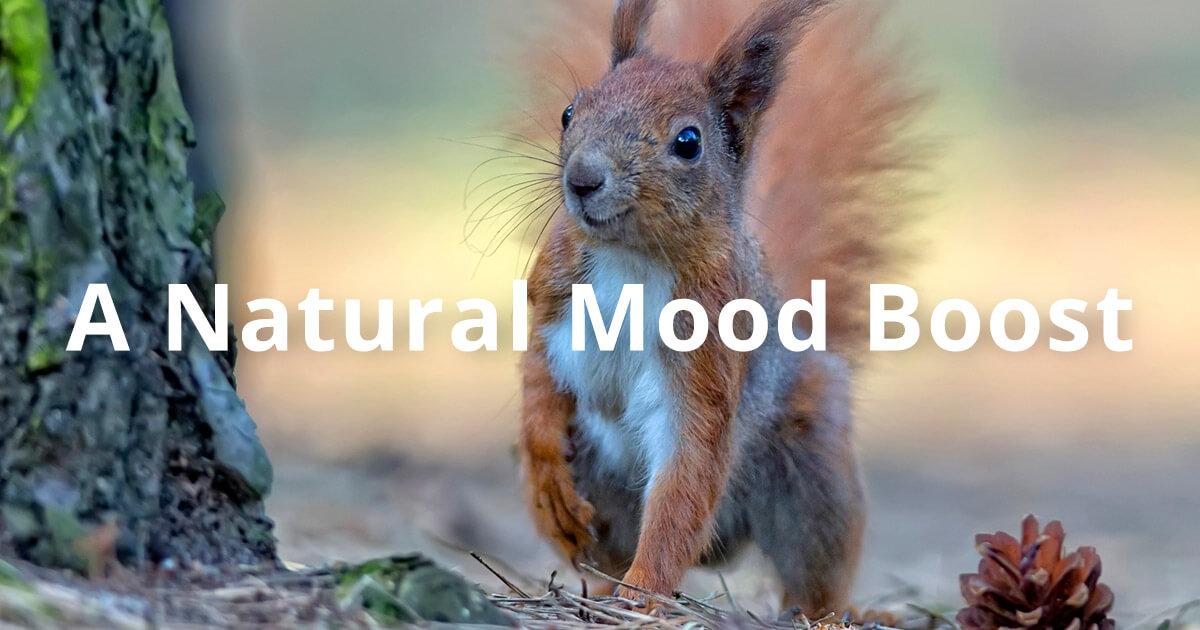 A Natural Mood Boost